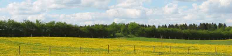 A photograph of a field and the sky